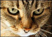 Clacha_closeup175x125