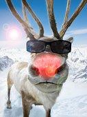 Christmasrudolph